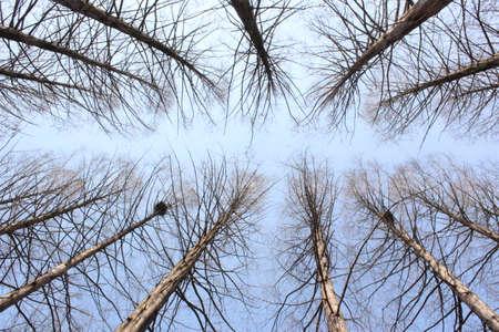 no cloud: Sky and tree