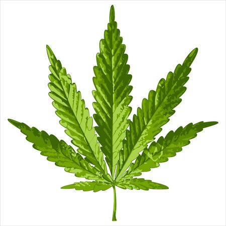 weeds: green cannabis leaf on white background vector