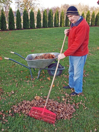Senior man raking autumn leaves in yard         photo