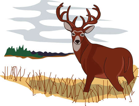 day dream: When hunters dream of a perfect day; they see this prize whitetail in the wild.  Makes a lovely scene for den dcor too!