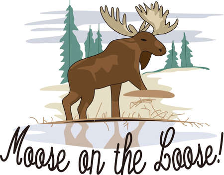 evergreen trees: A beautiful moose rules the winter lakeside community.  He is so lovely as a decoration for fleece jackets and shirts.