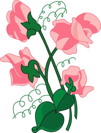 garden peas: These sweet peas are one of natures most lovely flowers.  Add their delicate beauty to your home dcor projects. Illustration