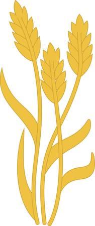 Tiges simples de grains d'or apporter la récolte à vos projets de cuisine. Cette tige automne de blé est une belle façon d'ajouter la beauté de la récolte à linge de cuisine. Banque d'images - 51208456