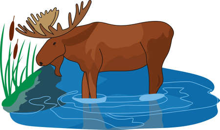 bog: Nature from the north is here with this moose in the bog.  Add him to your camping wear for a lovely outdoor feel.