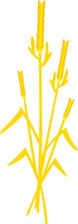 Rien cris été comme un champ d'avoine mûre. Profitez de la récolte avec cette conception sur des serviettes de toilette, décor de cuisine et plus encore! Banque d'images - 51219575
