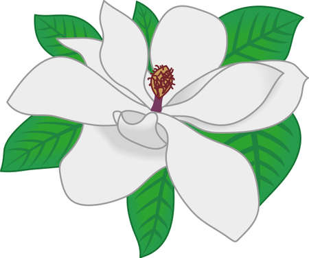 Use this magnolia bloom on a set of kitchen linens. Ilustrace