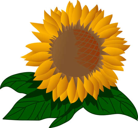 cheery: A bright giant sunflower creates a cheery decoration for any home.  Lovely on sun porch pillows Illustration
