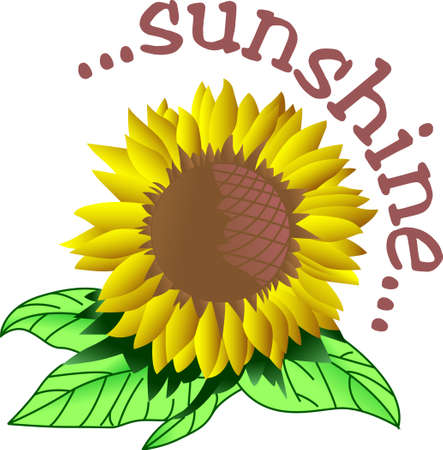 A bright giant sunflower creates a cheery decoration for any home.  Lovely on sun porch pillows.