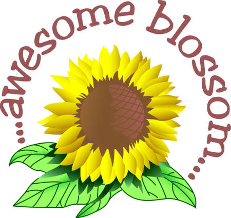 giant sunflower: A bright giant sunflower creates a cheery decoration for any home.  Lovely on sun porch pillows.