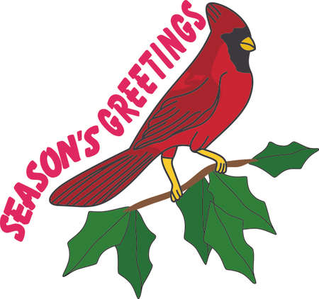 No matter where you live, you'll want to bring these bright red cardinals home to roost for the holidays. Add a touch of color with this design on your holiday projects! Vektorové ilustrace