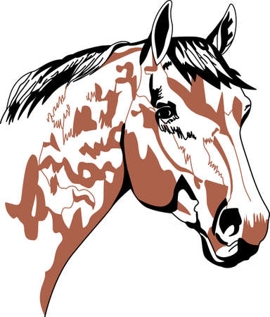 equine: We love painted ponies!  This lovely painted equine is a perfect choice for any equestrian! Illustration