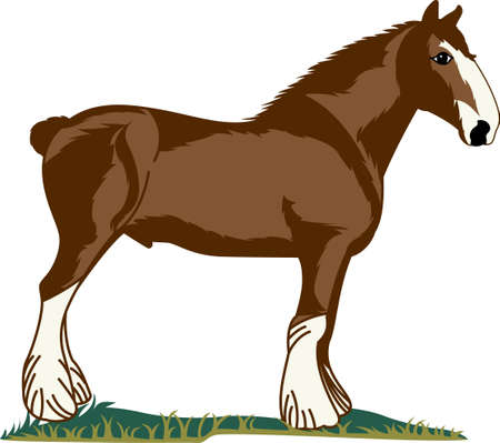 clydesdale: Bright up your home decoration with this design.
