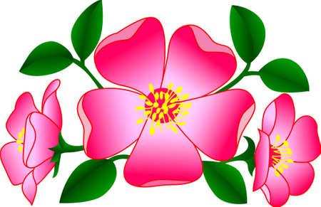 Bloemen voegen een unieke stijl toe en juichen elke ruimte toe. Krijg de geest van de lente in uw projecten met dit ontwerp.