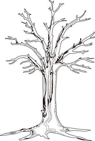 Intricate line art creates this tree outline that makes a stunning statement.  Its simplicity is perfect for home decorating projects. Illustration