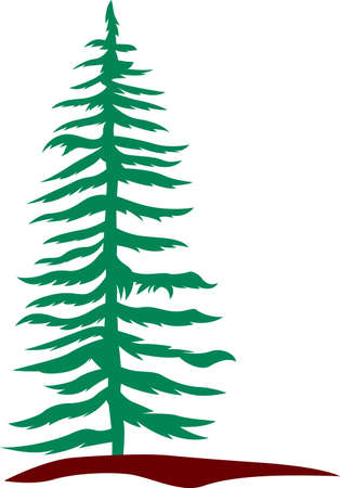 Stately evergreens add their unique beauty to the landscape of the northwest.  Lovely addition to home dcor creations