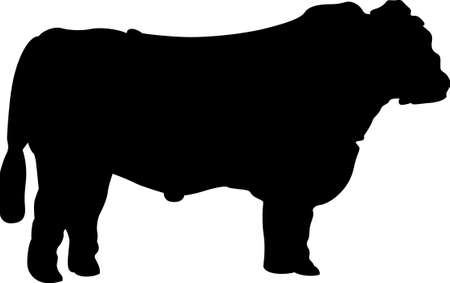 aberdeen: A big Black Angus is a cattlemans favorite.  Great for screen printing and vinyl cutting. Illustration