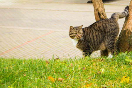 the street cat marks the tree 스톡 콘텐츠