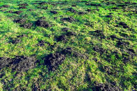 mole hills on the field