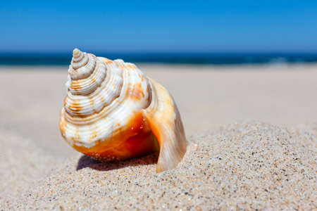 beautiful bright seashell on a sandy beach against the sea, concept