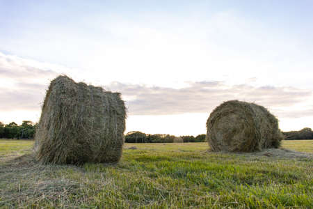 round haystacks of pressed hay on a green field Stock fotó - 134718680