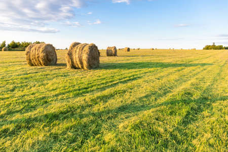 round stacks of pressed hay on the green field Stock fotó - 134719194