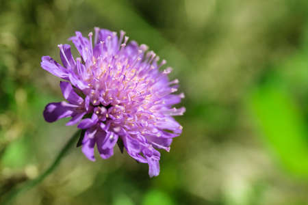 small bright purple flower on a green background, macro Stock fotó