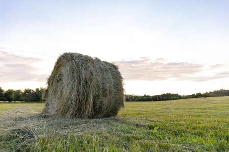 round haystacks of pressed hay on a green field Stock fotó - 134719530