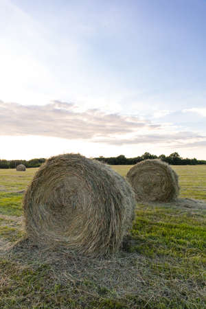 round haystacks of pressed hay on a green field Stock fotó