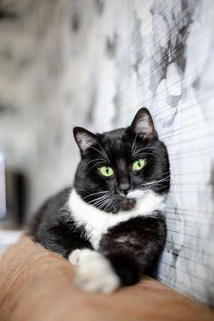 cute black domestic cat lies on a sofa