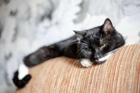 black cat with sad eyes misses the owner lying on the couch