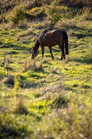 brown horse grazes on a green sunny meadow