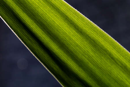 macro part of a long green leaf, abstract background