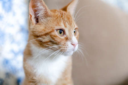 close-up of the muzzle of a ginger cute kitten
