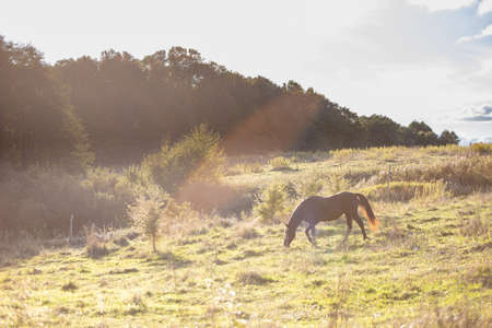 brown horse grazes in the meadow near the forest on a sunny day