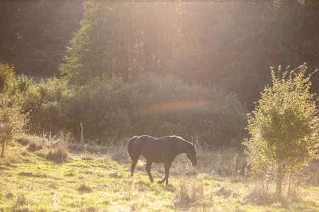 a brown horse walks through a bright sunny meadow
