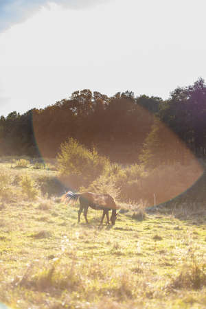 horse grazes in the meadow near the forest on a sunny day 免版税图像 - 158152551