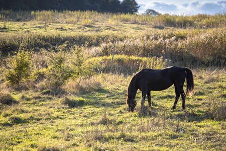black horse stands on a wild field and eating grass at sunset 免版税图像 - 158057262