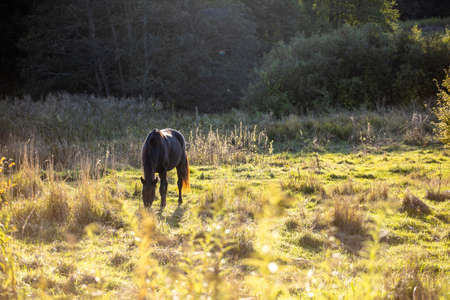 brown horse stands on a sunny meadow near the forest and eat grass
