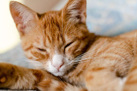 close-up of a ginger cute kitten sleeping on the bed