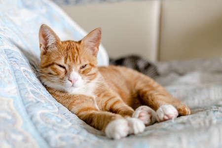 ginger cute kitten sleeping on the bed 免版税图像 - 158057127