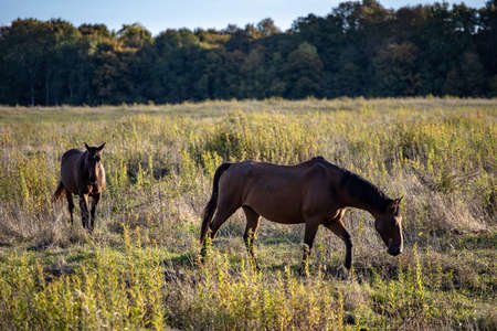 two horses are walking across the field