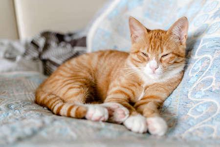 ginger cute kitten sleeping on the bed 免版税图像