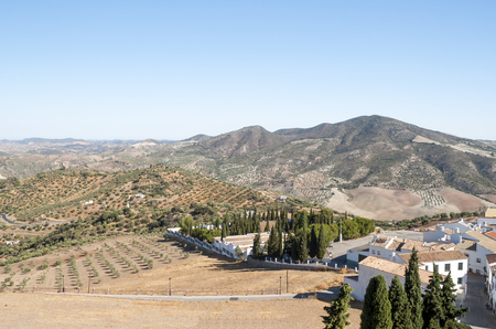 Olive grove in the mountains of Andalusia