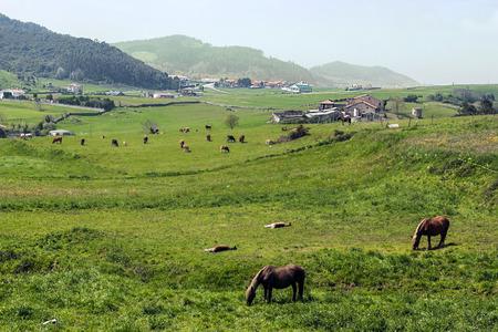 Fields of Santillana del Mar Фото со стока