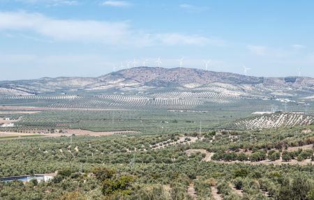 Landscape of olive trees in Granada