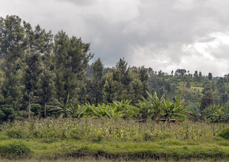 Fields with trees in Kenya on a cloudy day