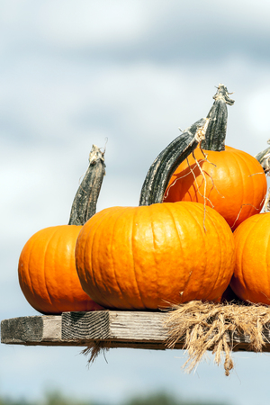 Pumpkins next to each other forming a background Imagens