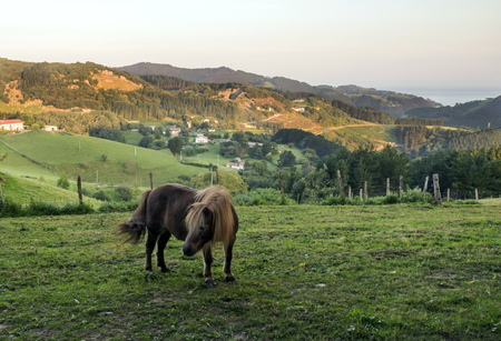 Horses in rural village in the spanish basque country in a sunny day.