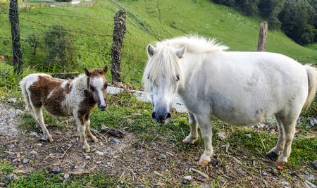 Pferde im ländlichen Dorf im spanischen Baskenland an einem sonnigen Tag.