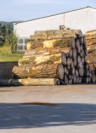 Logs on the outskirts of a sawmill Imagens